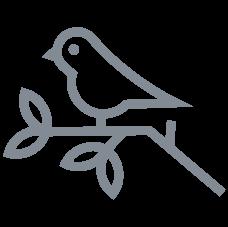 Birding - Turismo Urdaibai